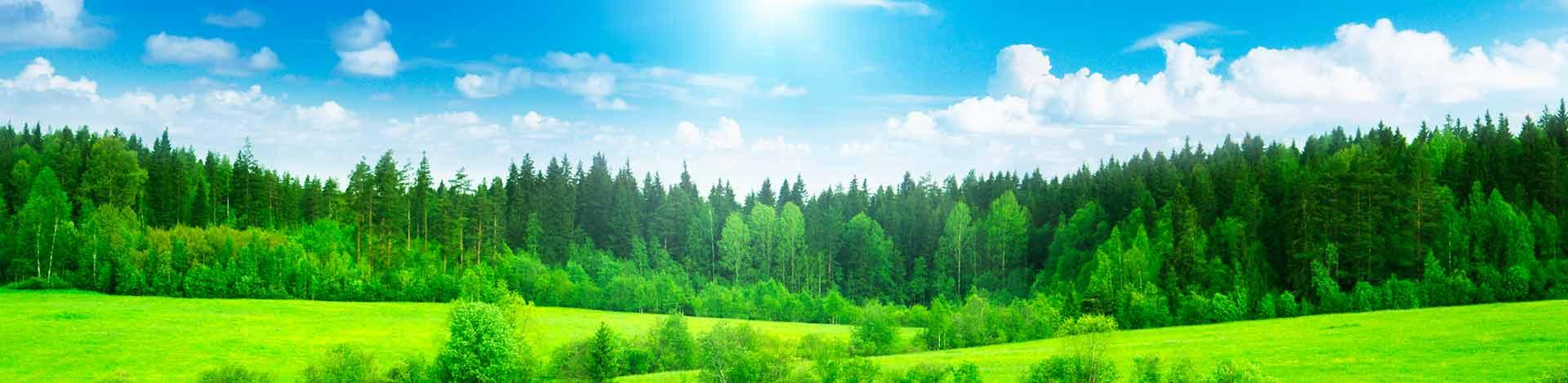 Ayudar a la industria a maximizar su eficiencia energética